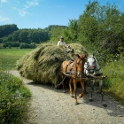 Bringing in the hay, Zalan, Transylvania