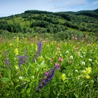 flower meadow Zalan valley, Transylvania. Photo: Catherine Karnow.